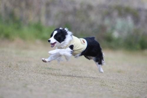 ティファニーの飛行犬