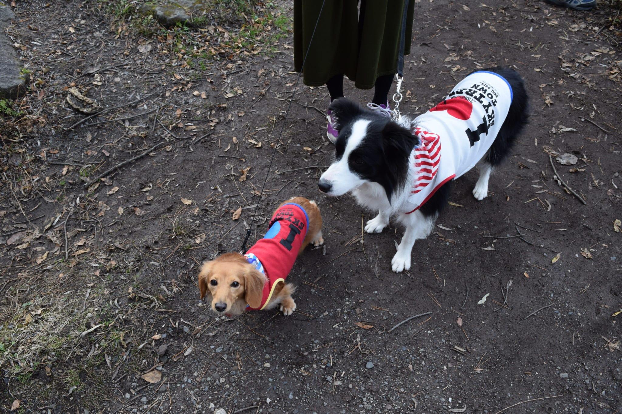 スカイツリーの犬用洋服