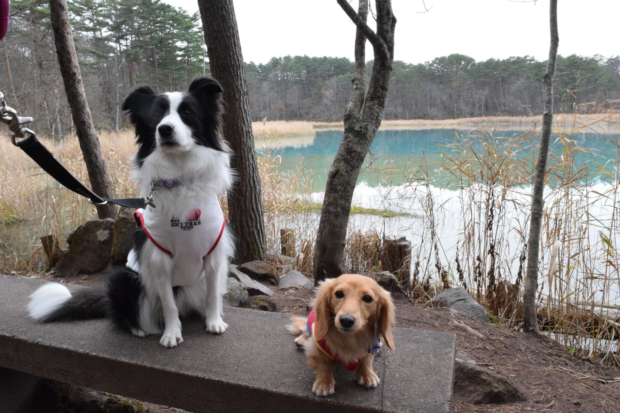 五色沼を犬の散歩
