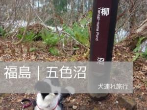 五色沼を犬連れで散歩