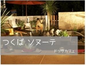 犬連れつくば ステーキ&タイ料理!キッチンリゾート ソヌーテのグリーンカレー