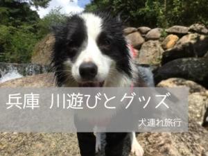 犬と川遊びするグッズ