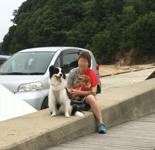 犬と一緒にイルカに会う
