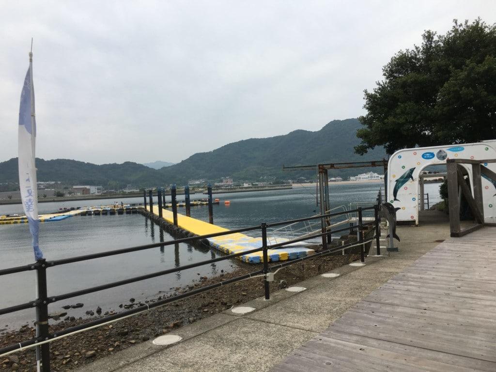 犬と日本ドルフィンセンター
