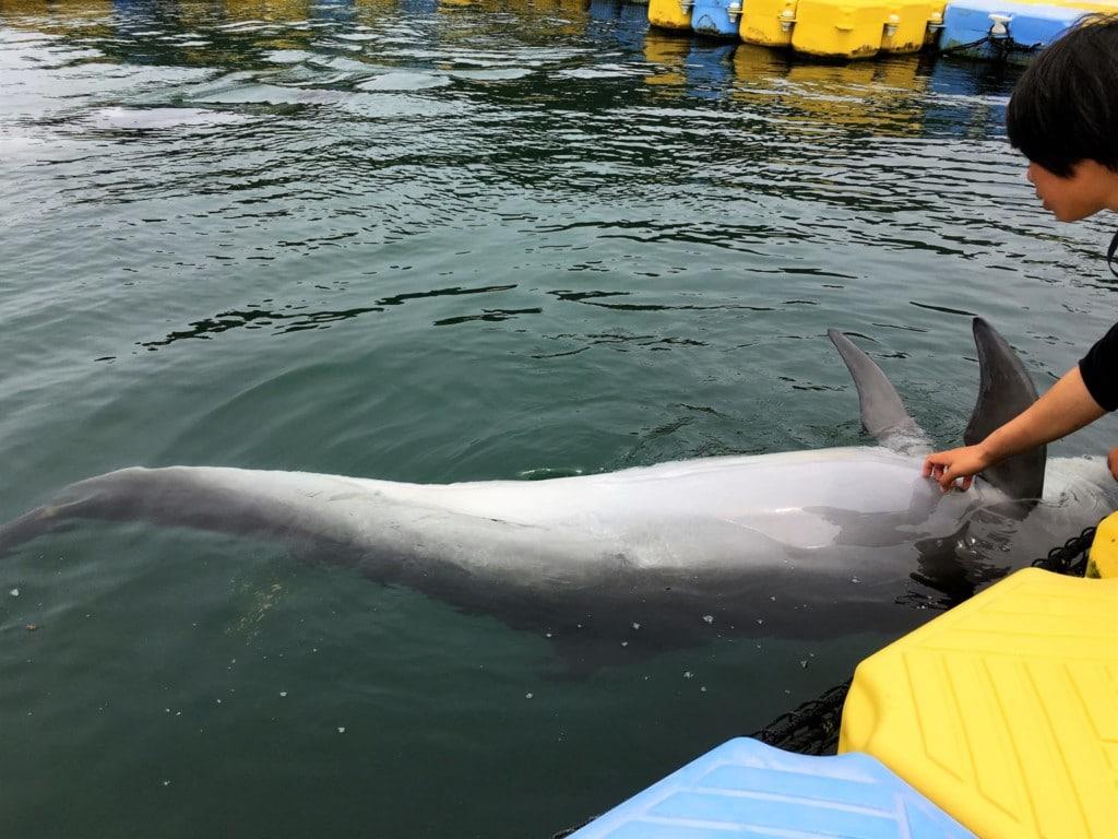 イルカのすぐ側まで行ける