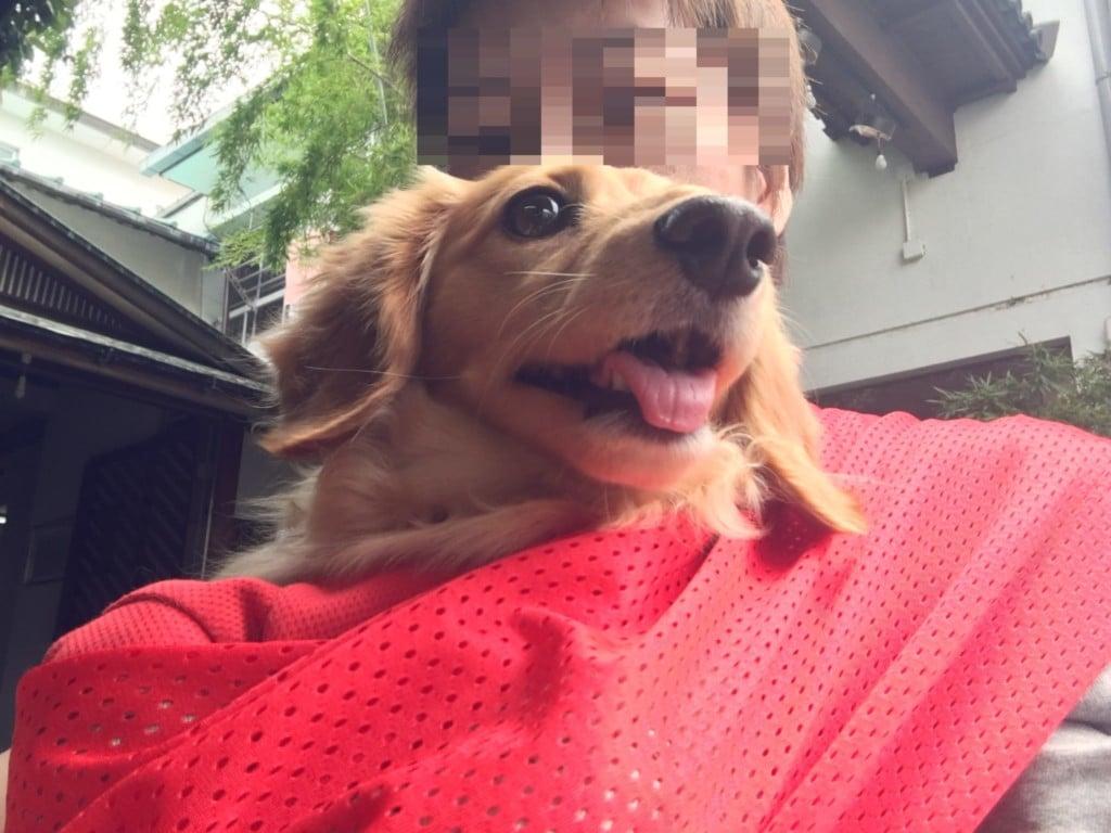香川県犬と一緒にうどん