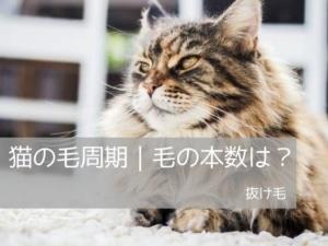 猫の毛周期|毛の本数は?