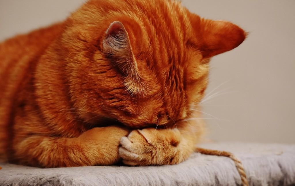猫にハッカ油は使えない