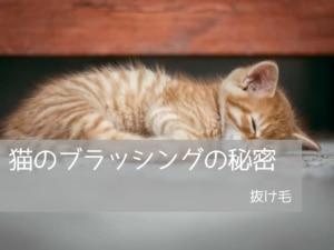 猫のブラッシングの秘密