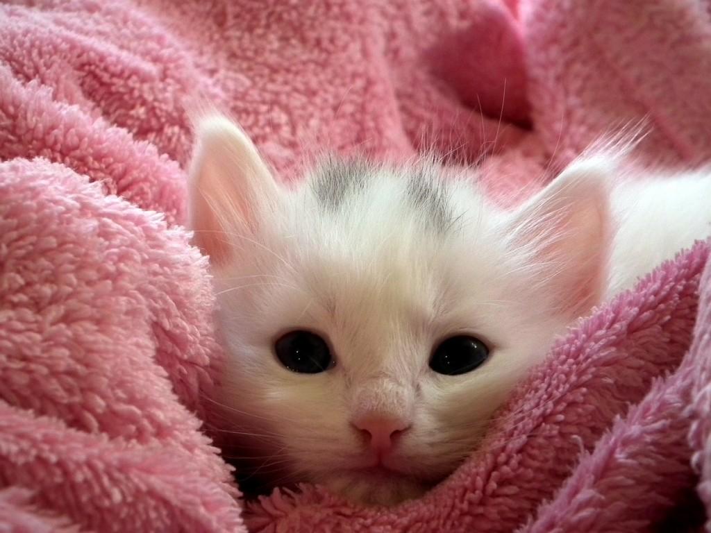 子猫は柔らかい毛