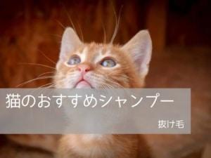 猫のおすすめシャンプー