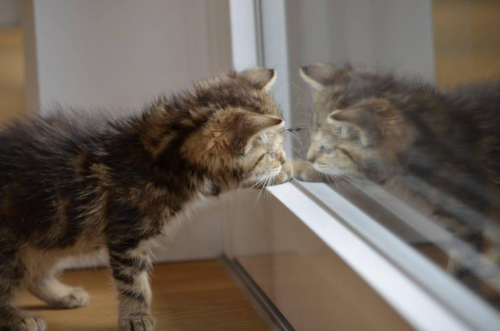 窓を見る子猫