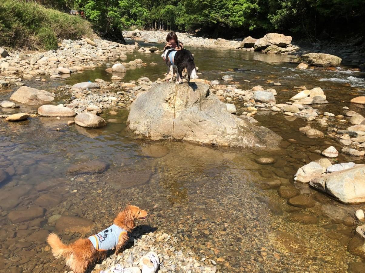 道の駅千種で犬と川遊び ボーダーコリーとミニチュアダックス