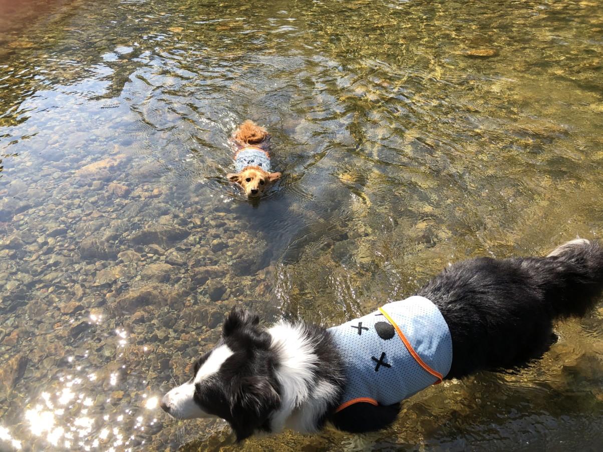 川で泳ぐモカとティファニー