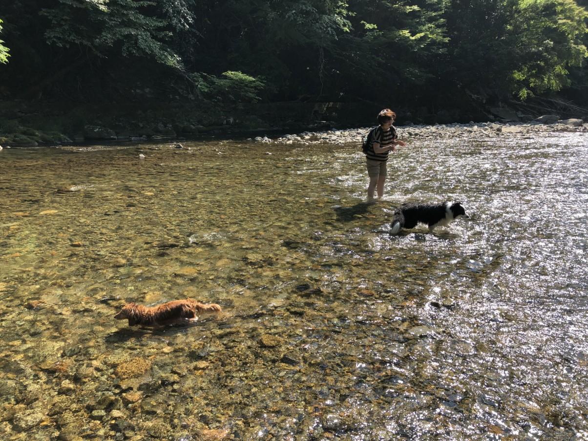 兵庫県で犬と行けるおすすめの川