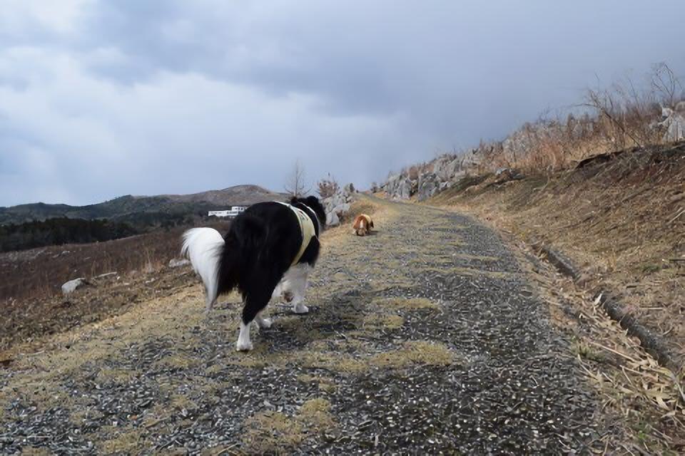 秋吉台で犬と散歩