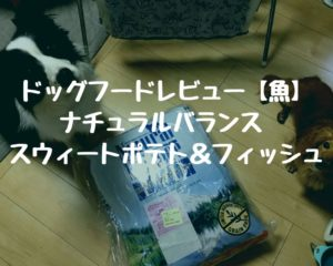 ドッグフードレビュー【魚】ナチュラルバランス スウィートポテト&フィッシュ