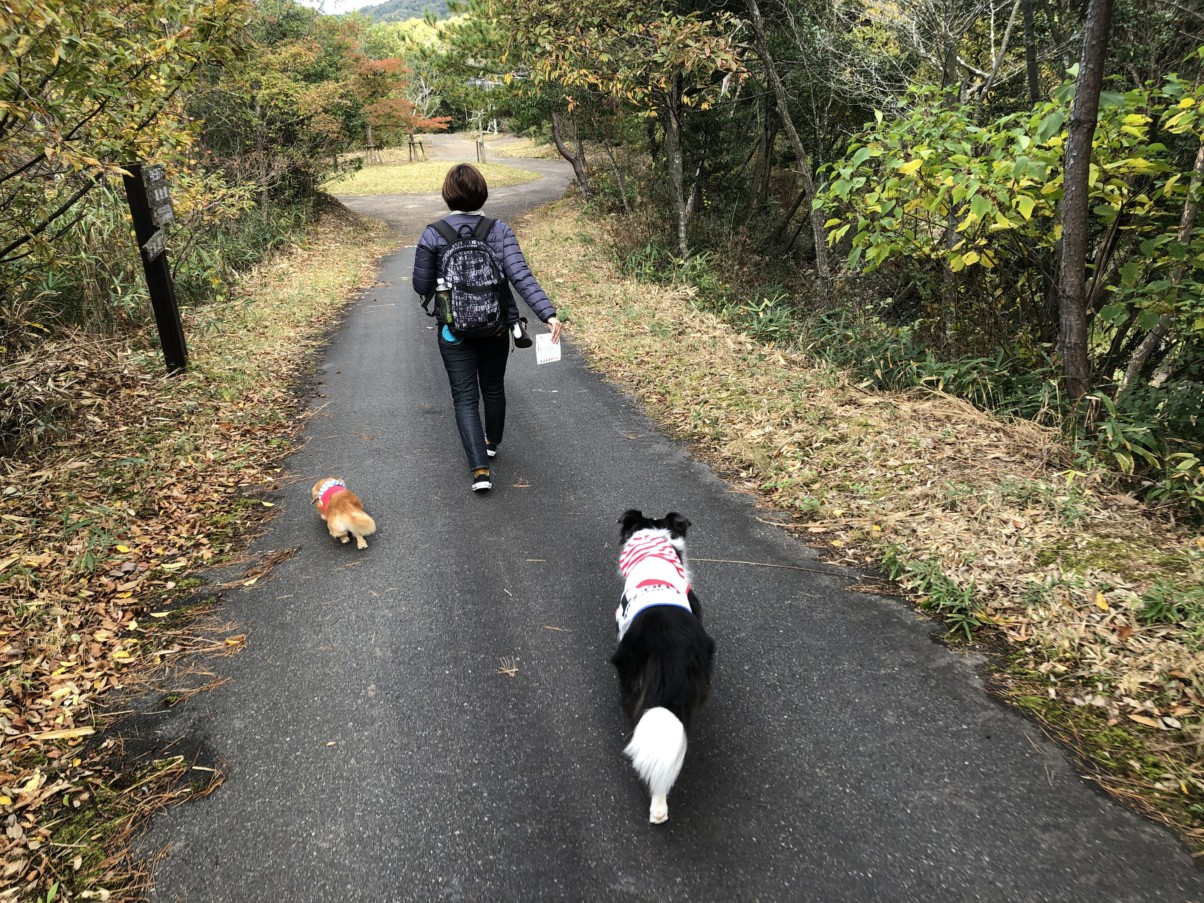 犬には良い散策路