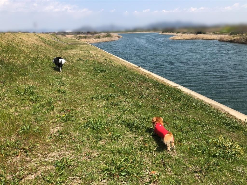 元気に午前中は河原をお散歩していた