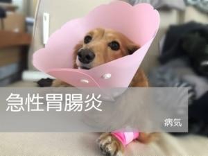犬の急性胃腸炎|症状の変化と治療内容