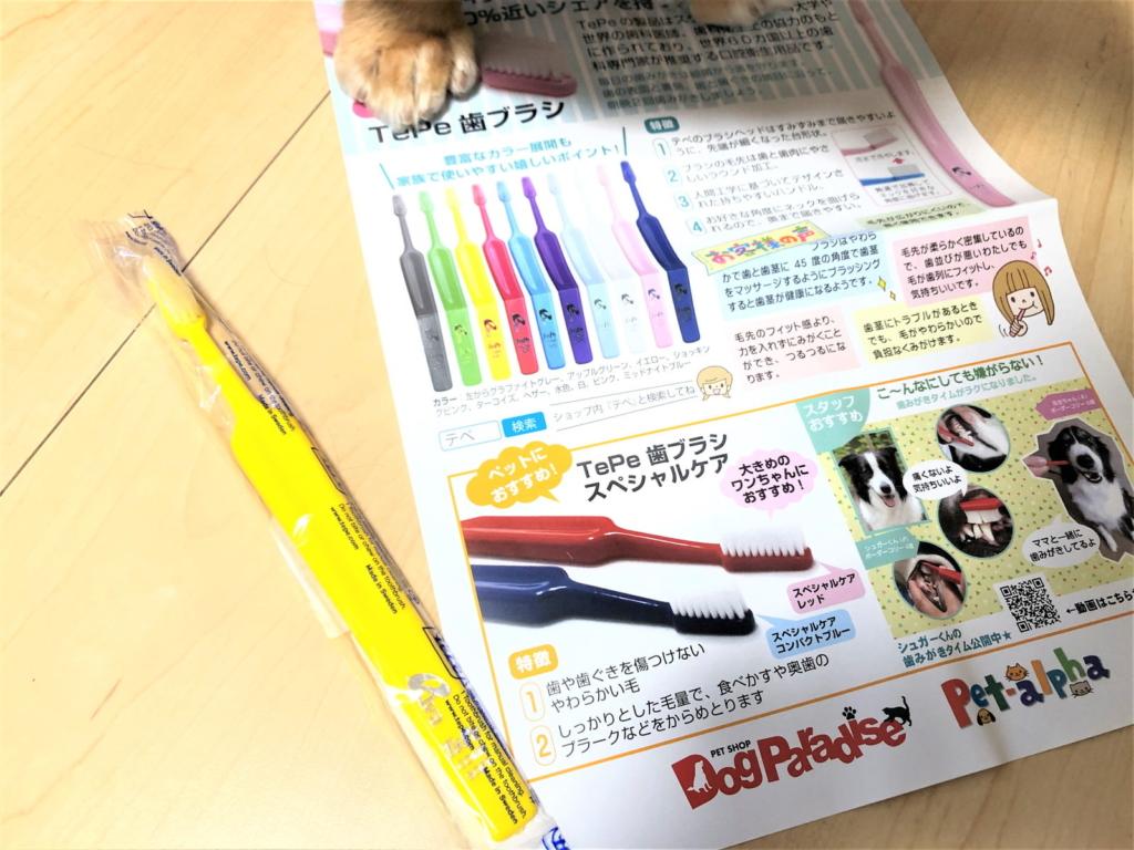 犬の歯磨きにTePeの歯ブラシ