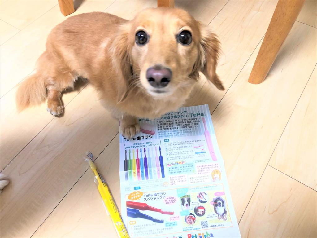 TePeの歯ブラシは色んな犬種で使える