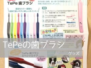 TePeの歯ブラシは犬にも使いやすい!