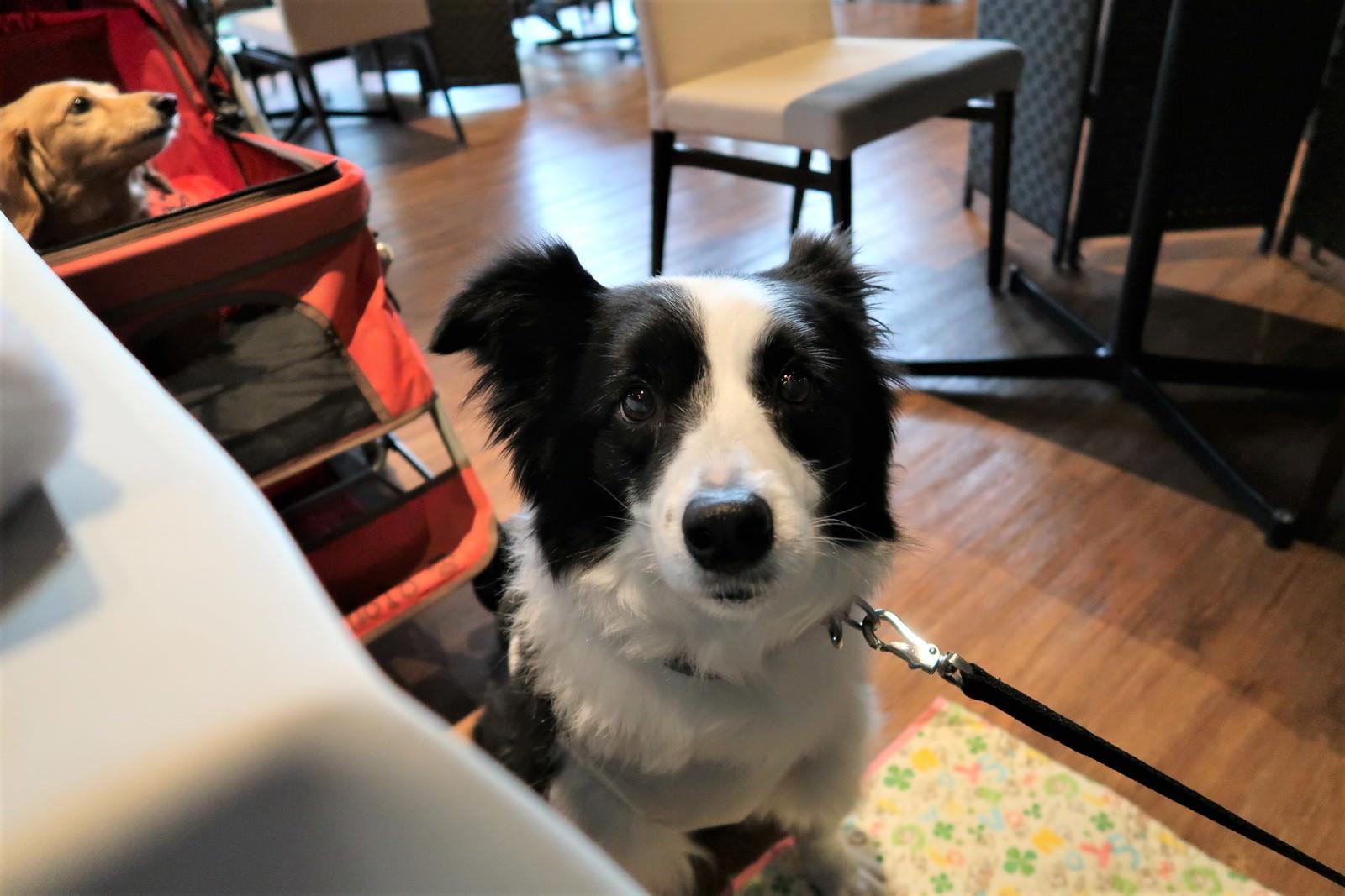 ティファニーはカフェマットで過ごします